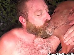 Bearded bear rimming tattooed mature and cums